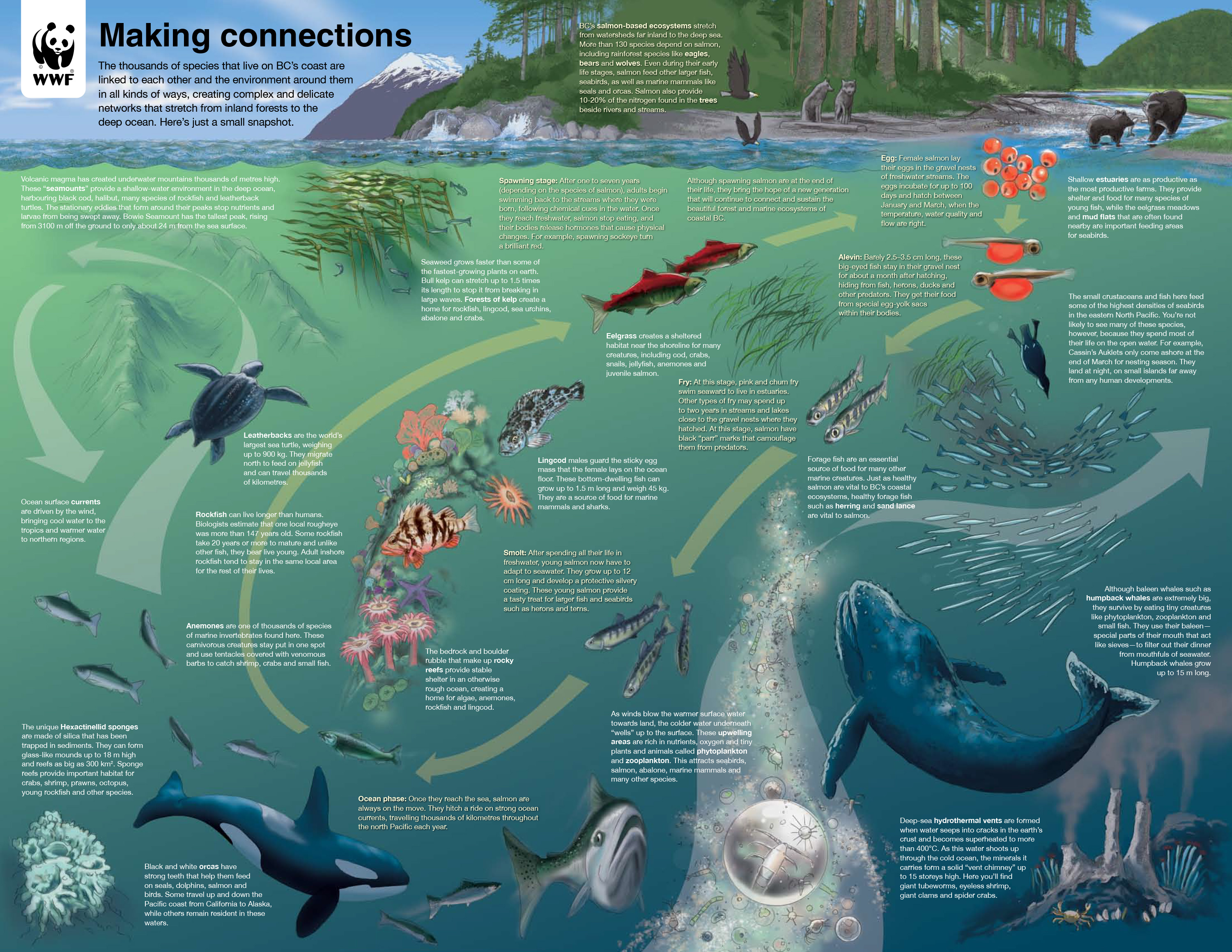 Bc marine life cycle diagram watershed moment wwf bc marine life cycle diagram ccuart Choice Image